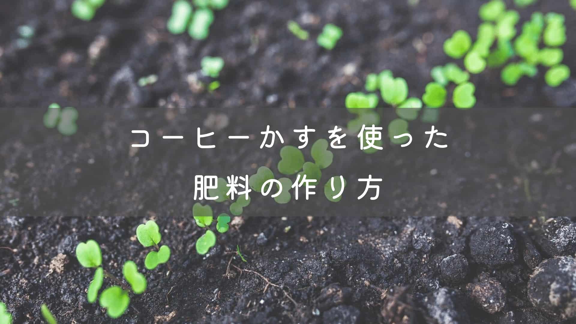 コーヒーかすを使った肥料の作り方